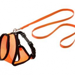 Kitten Harness Set Black / Orange 10mm