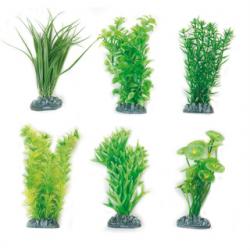 Planta Fiji Em Plastico - Xs