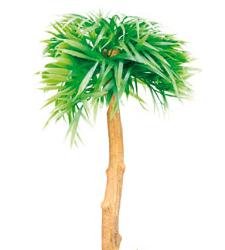Planta Palmeira Com Difusao De Ar