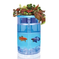 Of Betta Flora 2l Blue - 15x15x25cm