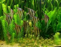 Chegada de peixes tropicais