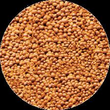 Ferti Soil Indi Small 5KG