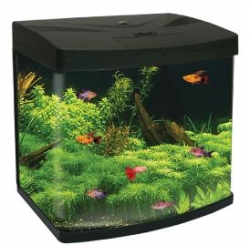 Cl Aquario Paradom Xl390 8w X2 Black