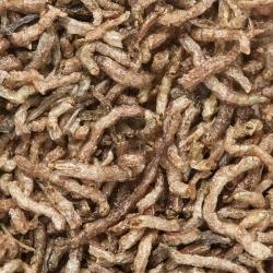 Aqua Food - Larvas de Mosquito Vermelho Liofilizadas 7g 100ml * ( Bloodworms FD )