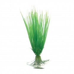 OF Hair Grass 8inches