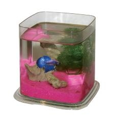 Cl Betta Battle Paradise - Clear