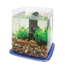 Cl Betta Battle Paradise - Blue