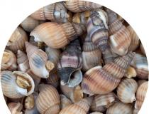 Aqua Food - Caracóis do Mar Liofilizados 50g 100ml * ( Sea Snails FD )