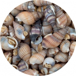 Aqua Food - Caracóis do Mar Liofilizados 50g 100ml * ( Sea Snails FD )
